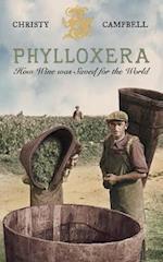 Phylloxera
