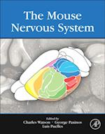 Mouse Nervous System