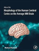 Atlas of the Morphology of the Human Cerebral Cortex on the Average MNI Brain