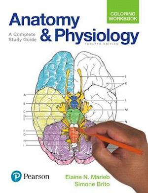 Bog, paperback Anatomy and Physiology Coloring Workbook af Elaine N. Marieb