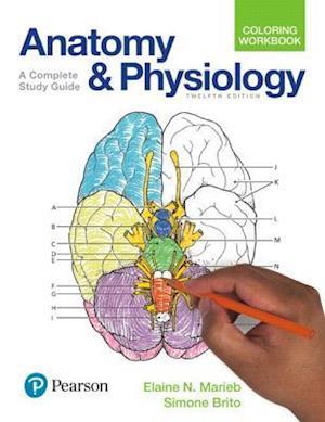 Bog, paperback Anatomy and Physiology Coloring Workbook af Elaine Nicpon Marieb