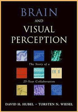Brain and Visual Perception