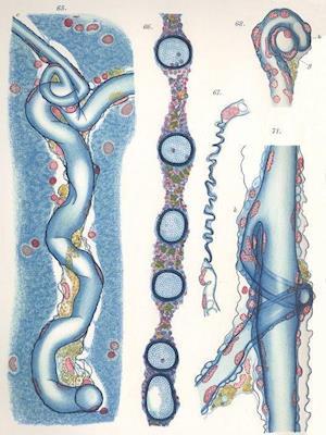 Cajal's Butterflies of the Soul