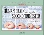 Human Brain During the Second Trimester (Atlas Of Human Central Nervous System Development)