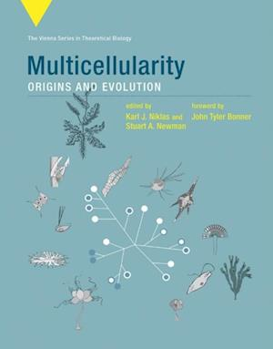 Multicellularity af Karl J. Niklas, John T. Bonner, Stuart A. Newman