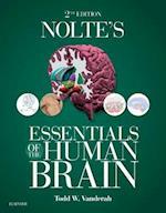 Nolte's Essentials of the Human Brain E-Book