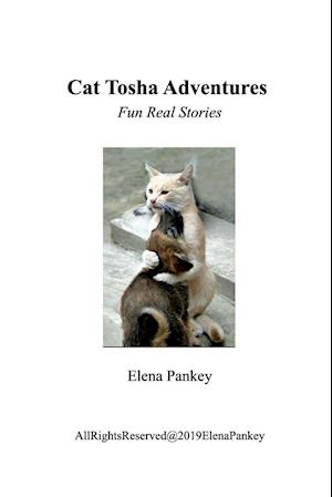 Cat Tosha Adventure