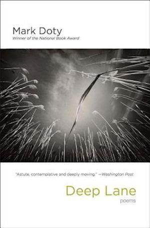 Bog, paperback Deep Lane af Mark Doty