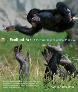The Exultant Ark