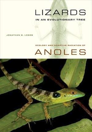 Lizards in an Evolutionary Tree af Jonathan Losos