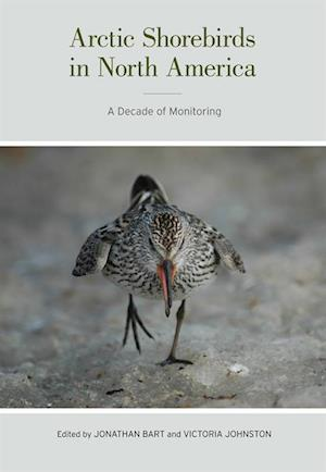 Arctic Shorebirds in North America