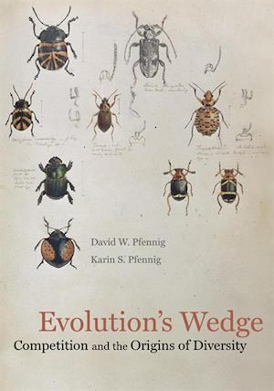 Evolution's Wedge af David Pfennig, Karin Pfennig