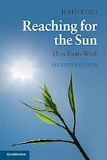 Reaching for the Sun af John King