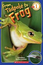 From Tadpole to Frog (Scholastic Readers)