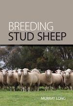 Breeding Stud Sheep