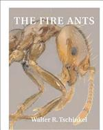 The Fire Ants