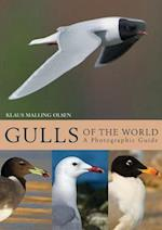 Gulls of the World