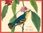 Audubon Warblers Keepsake Box