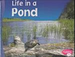 Life in a Pond af Carol K. Lindeen