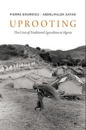 Bog paperback Uprooting af Pierre Bourdieu