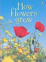 How Flowers Grow (Beginners)