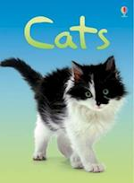 Cats (Beginners)