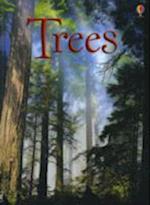 Trees (Beginners)