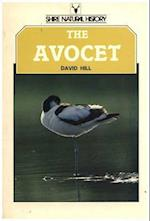 The Avocet (Shire natural history)