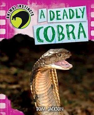 A Deadly Cobra