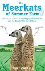 The Meerkats Of Summer Farm