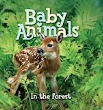 Baby Animals In the Forest (Baby Animals)