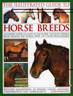 The Illustrated Guide to Horse Breeds