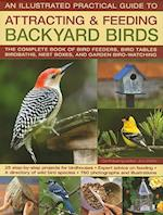 An Illustrated Practical Guide to Attracting & Feeding Backyard Birds