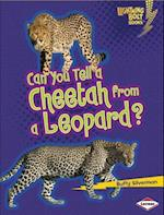 Can You Tell a Cheetah from a Leopard? (Lightning Bolt Books)