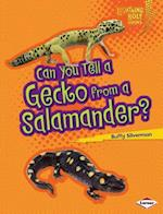 Can You Tell a Gecko from a Salamander? (Lightning Bolt Books)
