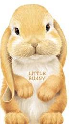 Little Bunny af Giovanni Caviezel, L Rigo