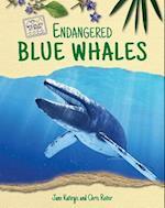 Endangered Blue Whales (Wildlife at Risk)
