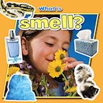 What Is Smell? (Senses Close Up)