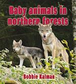 Baby Animals in Northern Forests (Habitats of Baby Animals)