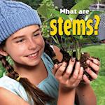 What Are Stems? (Plants Close-up)