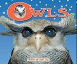 Owls (Level 10) (Storysteps)