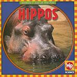 Hippos (Animals I See at the Zoo)
