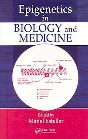 Epigenetics in Biology and Medicine