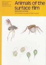 Animals of the surface film (Naturalists' Handbook, nr. 12)