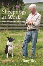 A Sheepdogs at Work