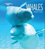 Whales (Living Wild)