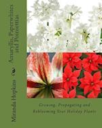Amaryllis, Paperwhites and Poinsettias