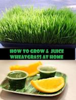 How to Grow & Juice Wheatgrass at Home