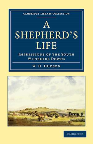 A Shepherd's Life: Impressions of the South Wiltshire Downs