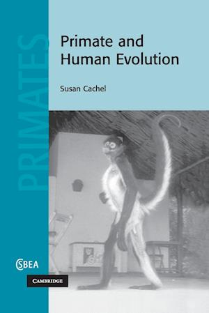 Primate and Human Evolution